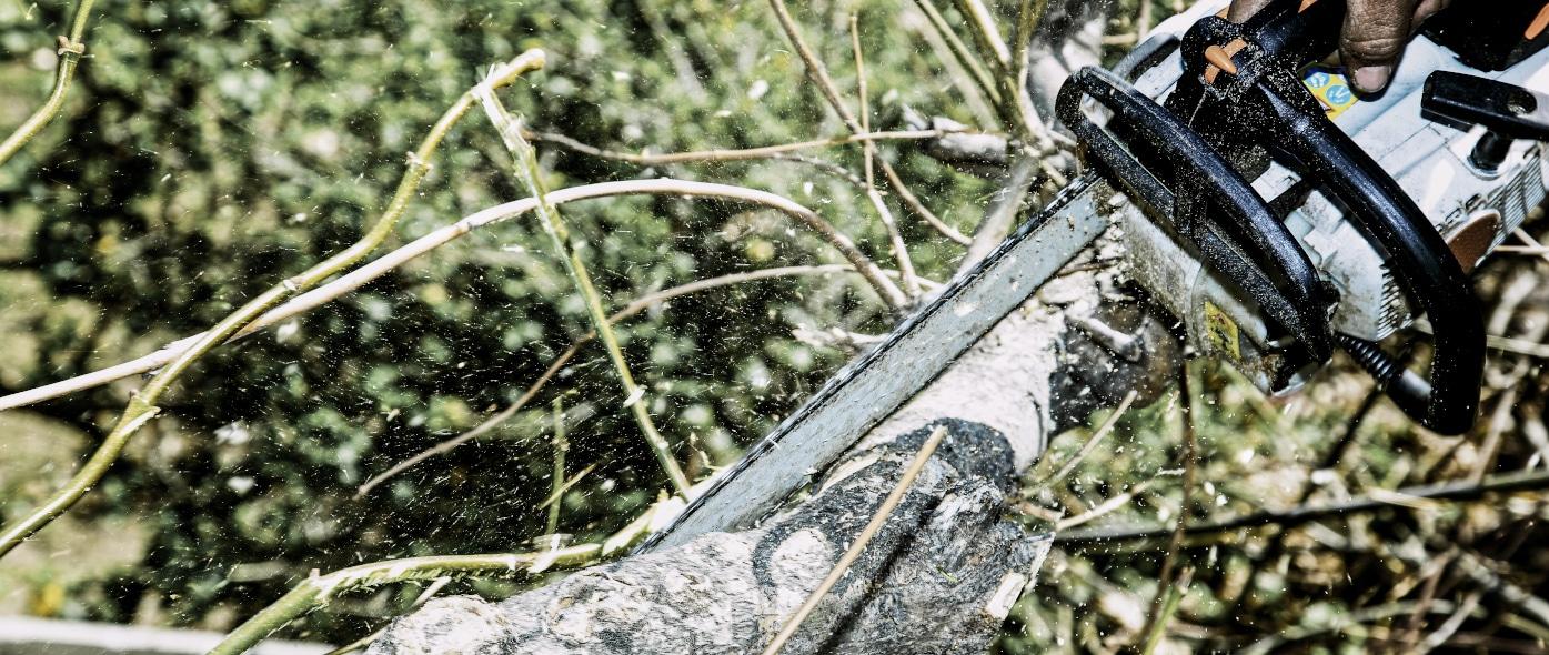 Professionelle Baumpflege: Wie und womit?